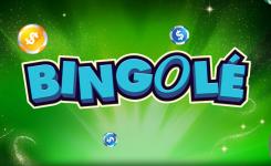 Bingole